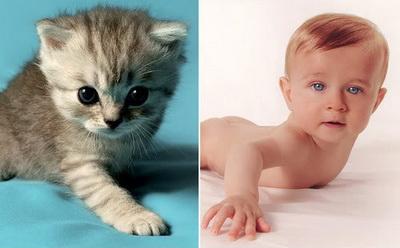 ребенок котенок