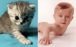 малышовый зоопарк