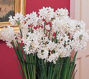 Украсьте свой дом цветами
